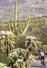 Cyclist(s) in Saguaro Nat'l Park, Arizona - 3-15 - C2 -0021 - 72 ppi-2