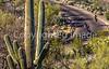 Cyclist(s) in Saguaro Nat'l Park, Arizona - 3-16 - C3 -0122 - 72 ppi-2