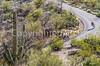 Cyclist(s) in Saguaro Nat'l Park, Arizona - 3-15 - C3 -0096 - 72 ppi-2