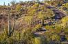 Cyclist(s) in Saguaro Nat'l Park, Arizona - 3-16 - C3 -0033 - 72 ppi