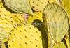 Saguaro Nat'l Park (east), Arizona -  D8-C3-0023 - 72 ppi