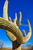 Saguaro Nat'l Park (east), Arizona -  D8-C2 -0013 - 72 ppi