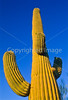 Saguaro National Park, Arizona - 18 - 72 ppi