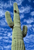 Saguaro National Park, Arizona - 2 - 72 ppi