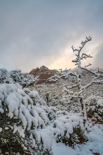 Sedona Snow Build-up