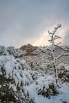 Sedona Snow Build-up