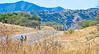 Along Arizona Hwy 82 between Sonoita & Patagonia   D4-C1 - - 72 ppi-3