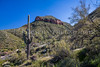 A landscape view of desert cactus vegetation in the Tonto National Forest, Arizona, USA.