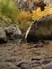 e-AZ-2006-0686 Az ash trees and pools  lower La Barge Ck