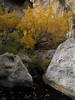 e-AZ-2006-0687 Az ash trees and pools  lower La Barge Ck