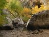 e-AZ-2006-0685 Az ash trees and pools  lower La Barge Ck