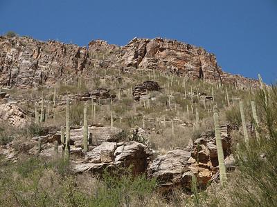 Sabino Canyon landscape.