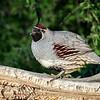 RM_D4_quail_MON1264-1553986335522