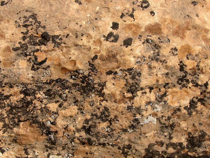 Natural Bridges National Monument ~ Rock lichen