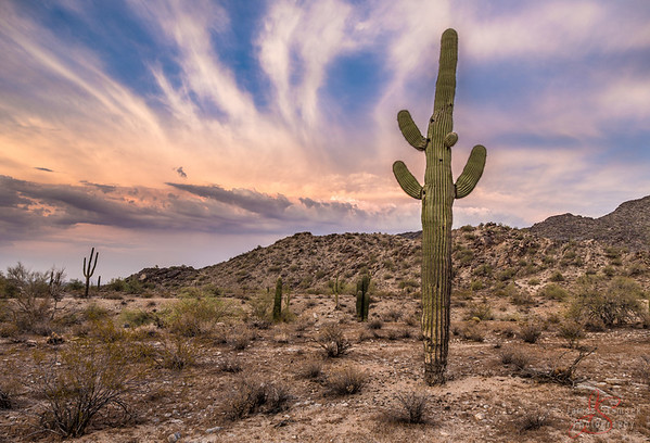 Various Arizona shots