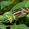 Butterfly_7145