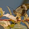 Butterfly_7124