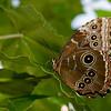 Butterfly_7050