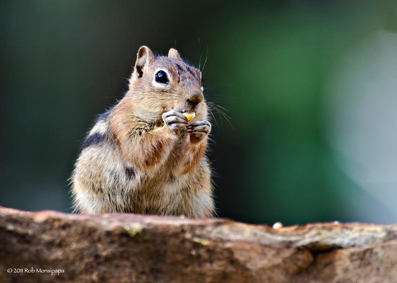 RM_D7000_Ground_Squirrel_7156