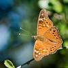 Butterfly_4984