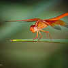 RM_D7000_Flame_Skimmer_4073