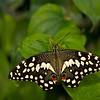 Butterfly_7071