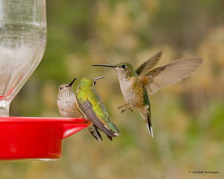 RM_Hummers_10402