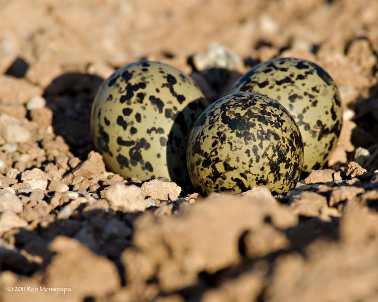RM_D7000_Stilt_Eggs_1404