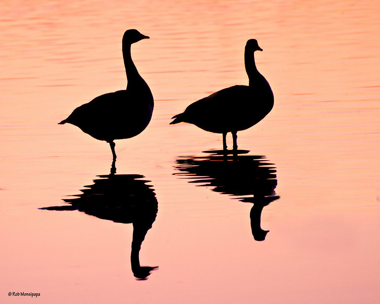 RM_Sunset_Geese_700_1047