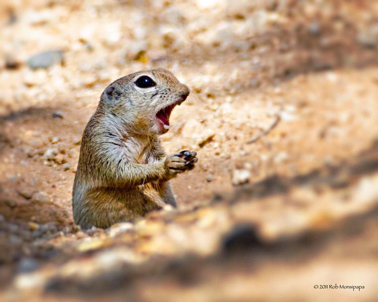 RM_D7000_Ground_Squirrel_6273