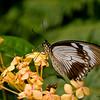 Butterfly_7114