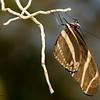 Butterfly_7160