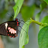 Butterfly_7076