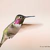 Humming Bird 01