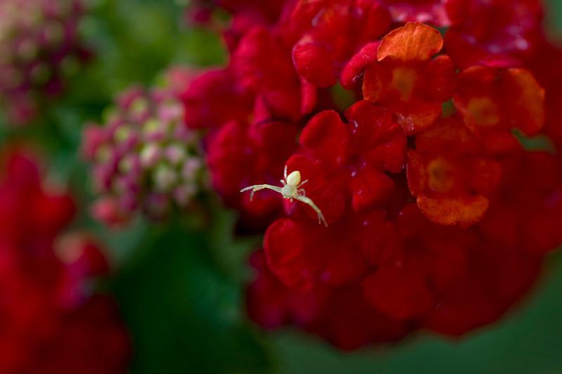 Spider 4370