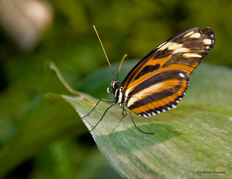 Butterfly_7154