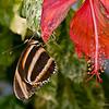 Butterfly_7166