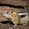 RM_D7000_Ground_Squirrel_1_5185