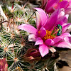 Fly Flower 4675