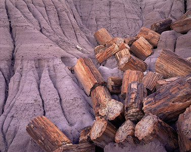 Petrified Forest National, AZ/Park, Blue Mesa, petrified log sections in eroded gray clay.  991h                           aea