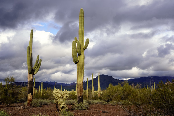 Stormy Day at Organ Pipe Cactus National Monument