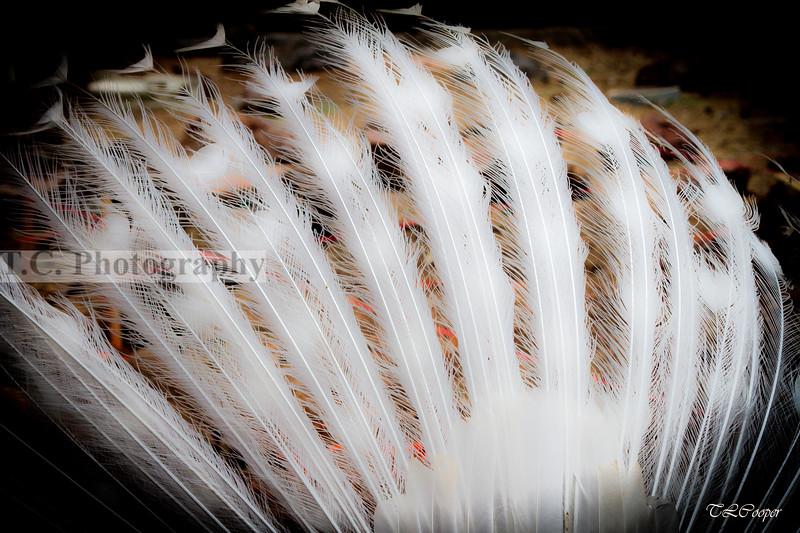 White Peacock Plume