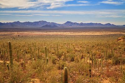 Saguaro National Park Photo