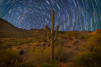 Startrail with grand cactus