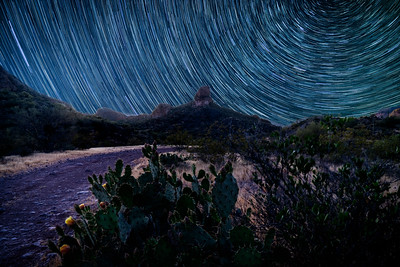 Startrail with small cactus