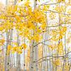 Fall in Arizona