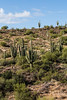 Arizona 11-13©DonnaLovelyPhotos com-0486
