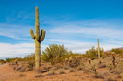 Saguaro Cactus-NAP_1902