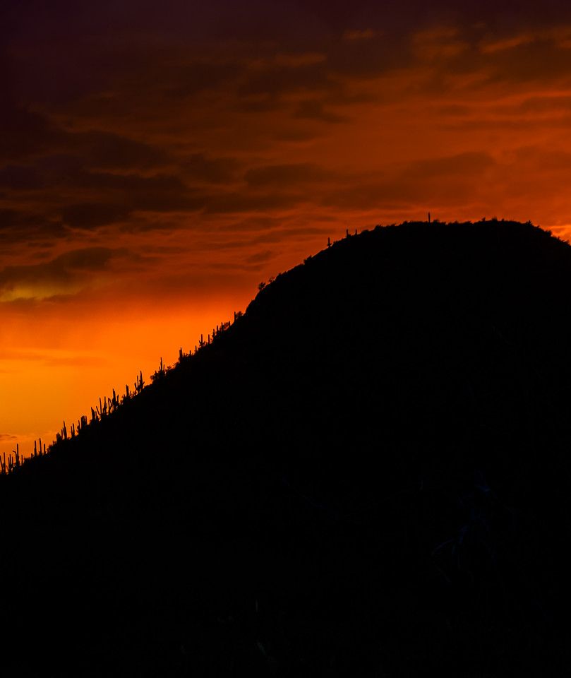 Prickly Hill