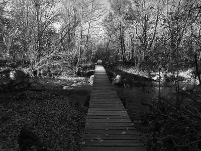 Black and white wooden path